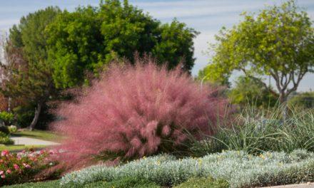 Village Nurseries introduces exclusive plant offerings for landscape professionals