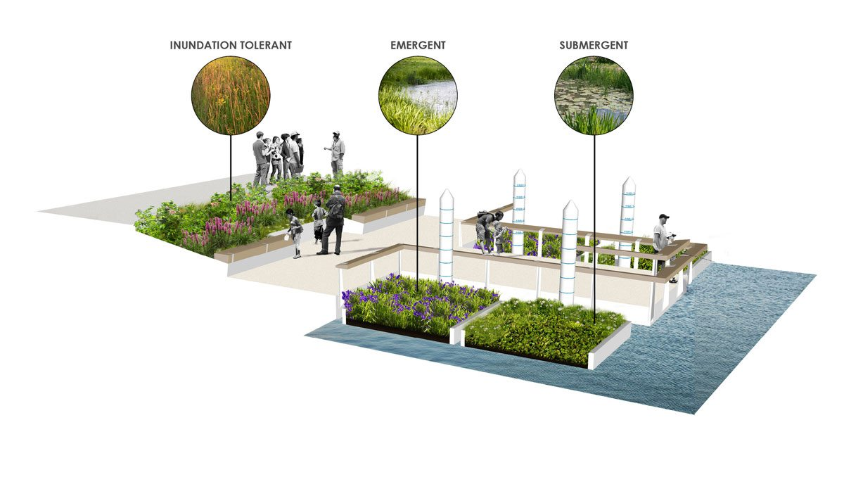 The Jetty: Different types of plants to establish a variety of ecosystems. Courtesy of Sasaki