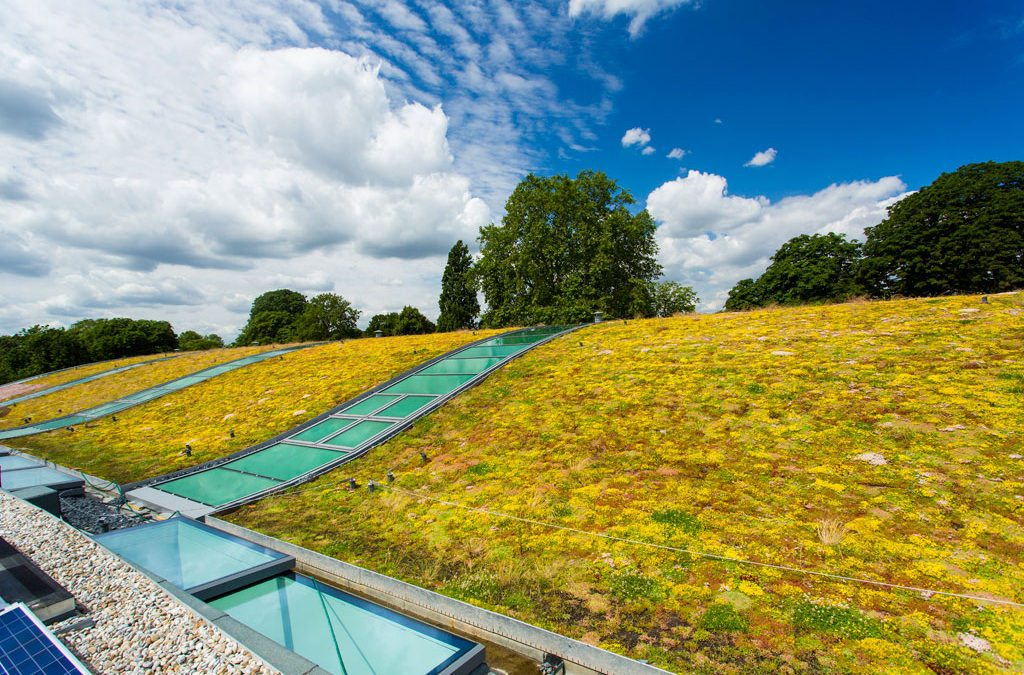 Hurlingham Racquet Centre's light green roof features Kerto® LVL