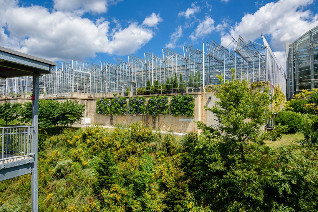 Vertical Garden, Living Wall at Phipps Conservatory. Credit: Phipps Conservatory