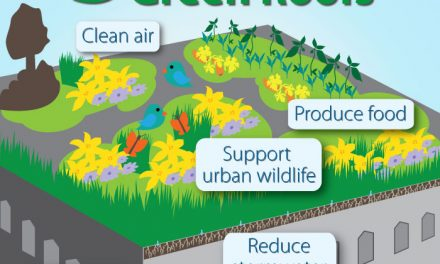 """What is a """"green roof"""" and are they helpful to the environment?"""