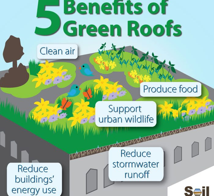 what is a green roof and are they helpful to the. Black Bedroom Furniture Sets. Home Design Ideas