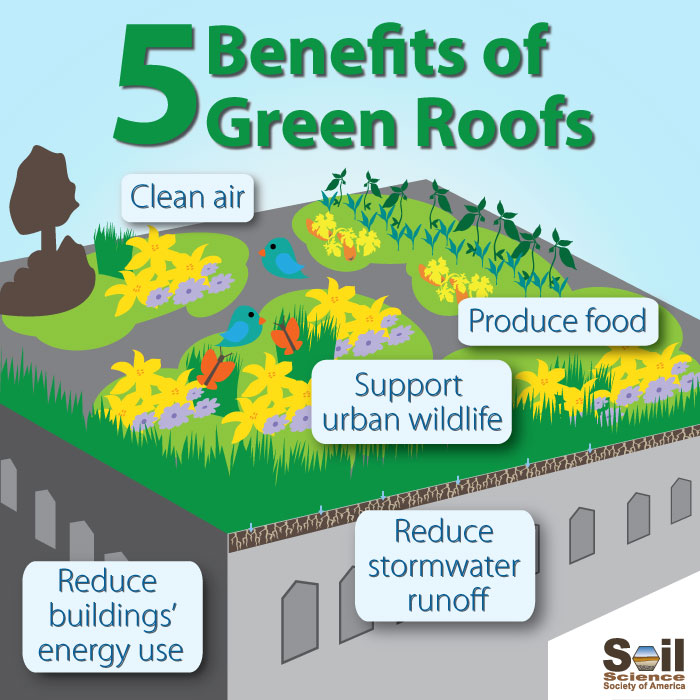 What Is A Green Roof And Are They Helpful To The