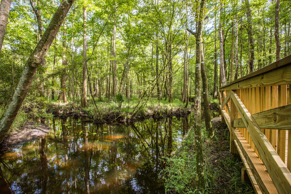 The Shearwater land plan establishes natural conservation areas alongside pristine Trout Creek, in St Augustine, Florida. Image by Chet Frohlich, courtesy of Freehold Communities