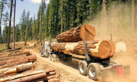 New USGBC Timber Traceability LEED credit aids efforts to eliminate the use of illegal wood in buildings