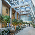 A healthy future for mass timber in medical facilities